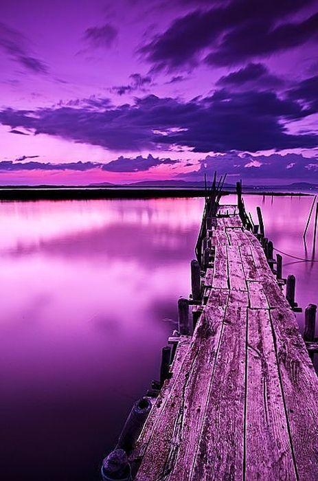 purplebridge